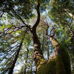 Tree 20 by Kekilen