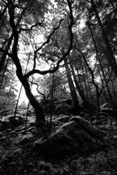 tree 21 by Kekilen
