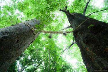 Tree Portal by Kekilen