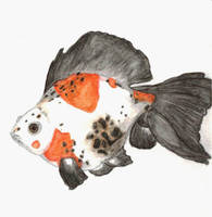 Mr. Grumpy Gus Goldfish by liljeska