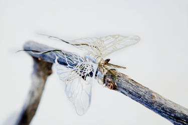 Emergence---Rest/Memory of Flight by Tofubunnny