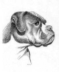 Boxer portrait by asbolos