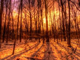 Golden Forest by JohnKyo