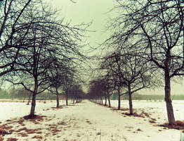 Winter Morning by JohnKyo