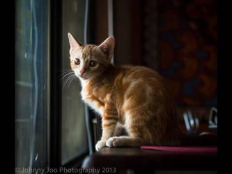 Kitten in the window by JohnKyo
