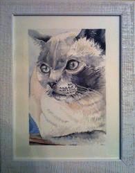Bianca_Tash_cat by BlackPinkOrBlue