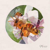 Bees on Almond Blossoms by emcorpus