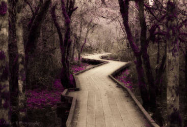 Woodland Fantasy by fireflyally7