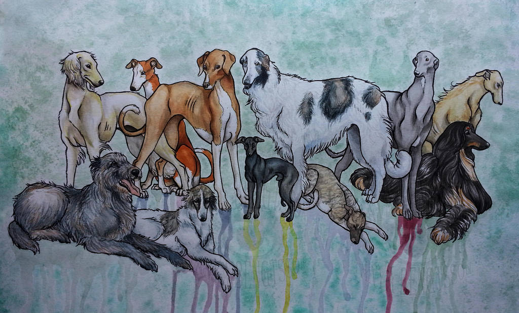 Sighthounds by RaggedVixen