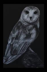 Barn Owl Sketch by MadSebby