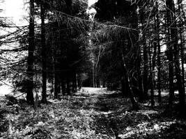 Pathway by NostalgiaPhotos
