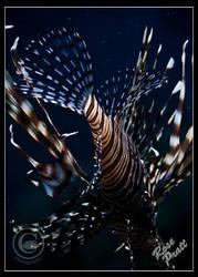 Ocean Feathers by LadyEdana