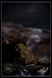 Dark Prince by LadyEdana