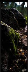 Pretty Moss by LadyEdana