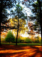 Fall II by tatiana66