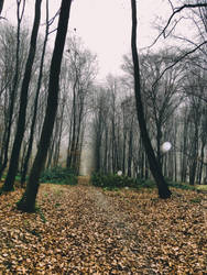Alone in the forest IV. by Activvv