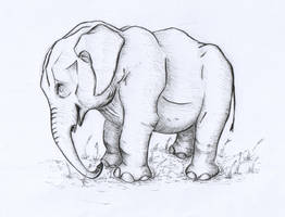 Elephant-lines by PuNK-A-CaT