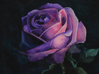 Dark rose by Gkantinas