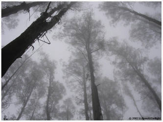 Seep, Mist by EclipseAtTwilight