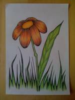 Flower Power by majann