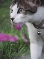 Kitty by nyanperona-chu