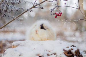 Candy in the snow. by ApopFrauks