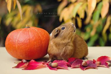 One or two pumpkins? by ApopFrauks
