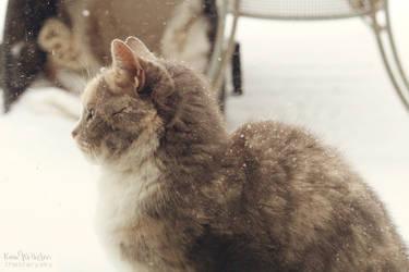 Winter Cat by TheStarySky