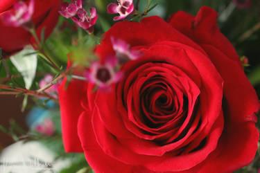 To Rose by TheStarySky