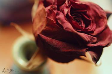 Le Rose by TheStarySky