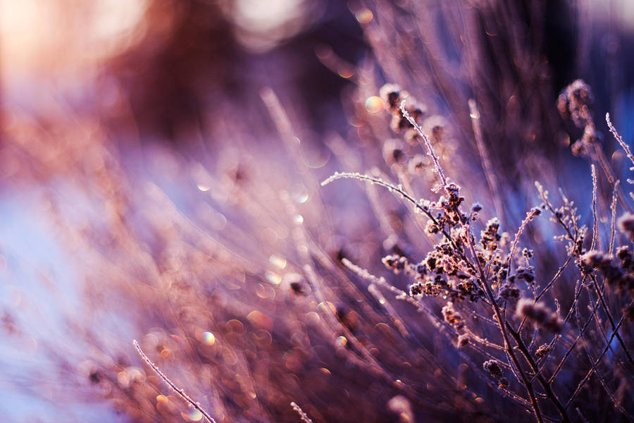 Frozen Morning by Atinaj