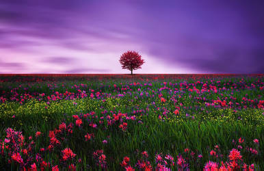 Landscape with dramatic sky by BessHamiti