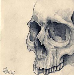 Skull by xxHellhoundxx