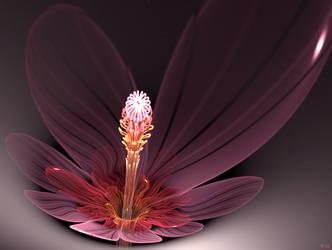 Hyacinthus plutonii by WolfgangMesmer