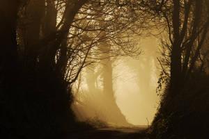 hazy lane by RoB-FranKsDad