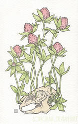 red clover all over by Longhair