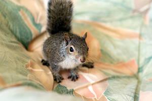 Squirrel by woobiee