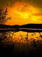 Safari by LAPoetry-n-Photo