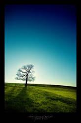 Standing Alone In A Dying Sun by bosniak