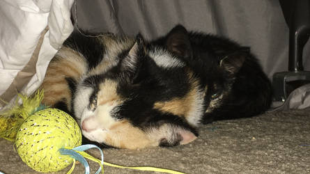 New Kittens by Batmansss