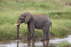 Elephant 03 by syoul-stock