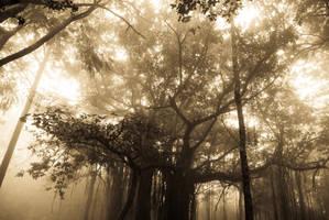 Misty Mornings by mehtadushy