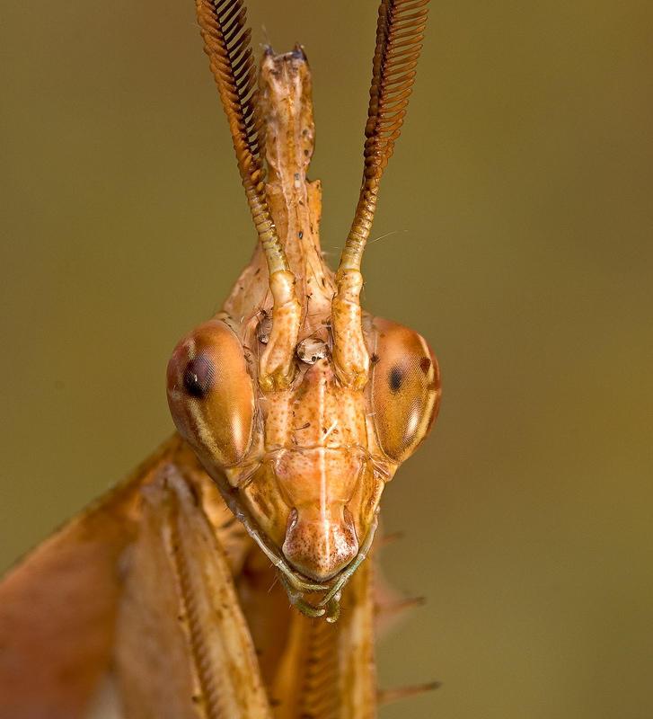 norix's Profile Picture
