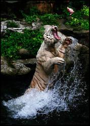 White Tiger by devilsjaw