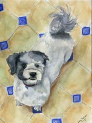 Joey's dog Linky by blondewolf2