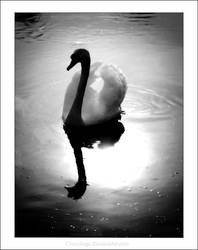Swan. by chocologic