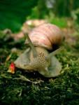 Snail, snail. by chocologic