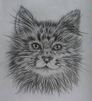 Cat by DarkWolf-97