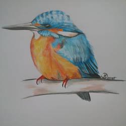 Kingfisher by Balticdragon