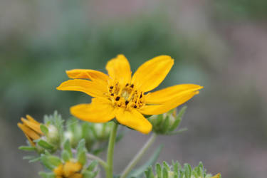 Yellow Weed by Iceechibi